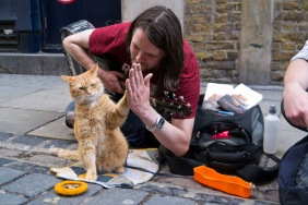 Cat National-High-Five-Day-
