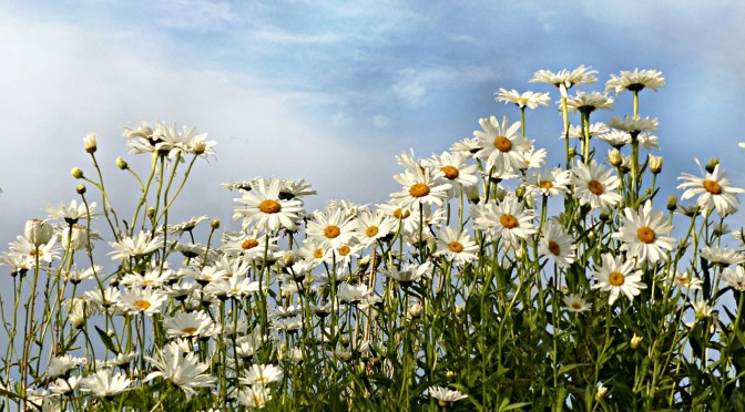 Pushing up Daisies!