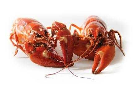 crayfish-423251_1280