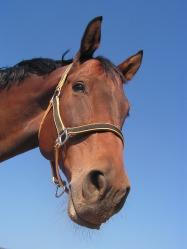 horse-473093_640