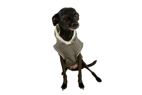 dog-2423574_640