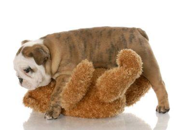 doghumpingbear